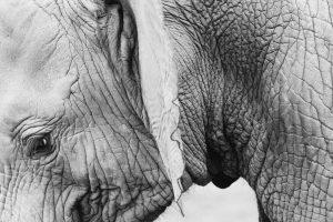 Safari Gorilla Africa - Midoro